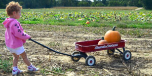 toddler at pumpkin patch